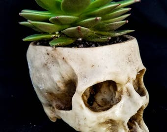 Spiked Succulent Skull