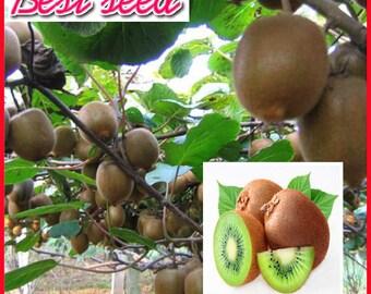 bonsai Kiwi Tree seeds, Kiwi seeds , Farm garden fruit seeds A Growing Tropical Fruit Tree 100 pcs  T088