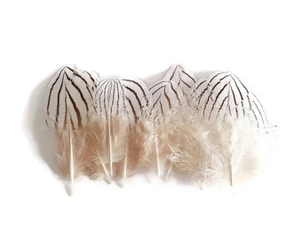 Brown striped White pheasant feathers