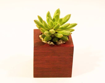 PurpleHeart Wood Succulent Planter - Simple Is Better Collection