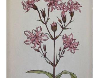 Botanical Print - Flowers of the Meadow - #6 Ragged Robin