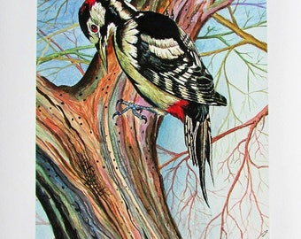 A4 Giclée Print entitled 'Greater Spotted Woodpecker' from an original watercolour painting by artist Martin Romanovsky