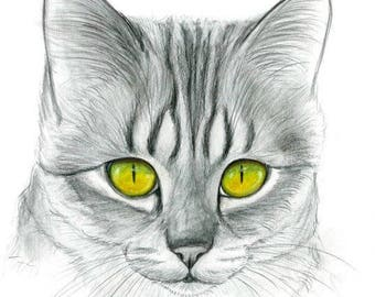 Cat Original Pencil Drawing