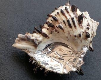 Orgonite Natural SeaShell Orgone Life Energy pràna