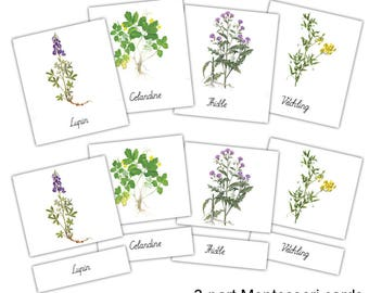 Montessori material, 3-part cards, Flowers, Learning cards, Flash cards, instant download, digital file, preschool materials