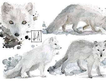 Arctic Fox Watercolor-Artic Fox Watercolor