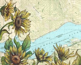 Dog Mountain art, Columbia River Gorge painting print flower illustration, Washington hiking print, arrowleaf balsamroot wildflower art