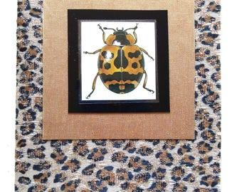 leopard ladybug card