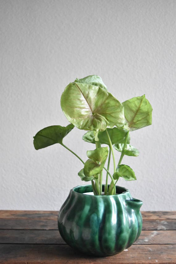 ceramic green flower pot