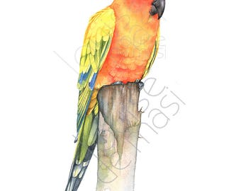 Sun Conure print of watercolor painting, SC22817, A3 size, sun conure watercolor painting print, parrot watercolor painting print