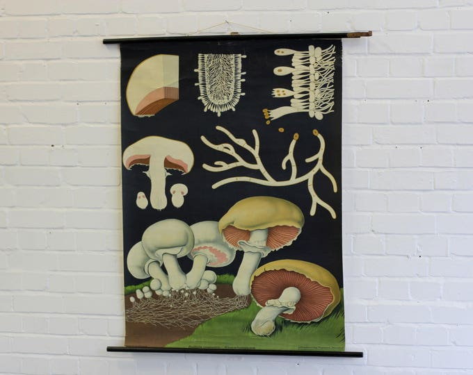 Wall Chart Of The Mushroom By Jung-Koch-Quentell Circa 1950s