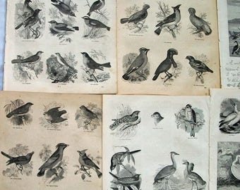 Bird Images from Vintage Book,  Paper Pack for Collage, Scrapbooking, Cardmaking, Mixed Media Art