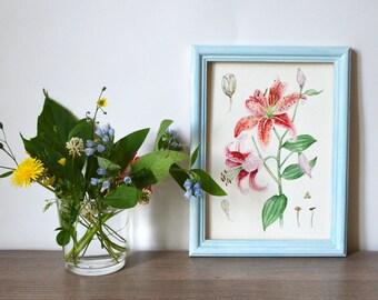 Original watercolor painting| Botanical illustration| Flower painting| Watercolor flower painting| Small painting| LILY