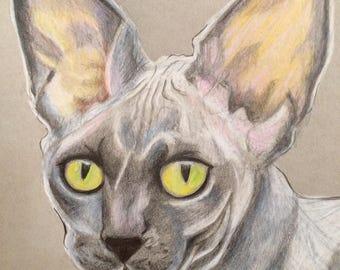 Custom Pet Portrait/Graphite or Colored Pencil