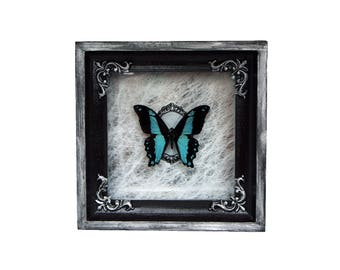 Real butterfly Papilio bromius / moth oddity curiosity home decor framed insect natural history taxidermy dark art