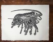 Spiny Lobster Florida Key...
