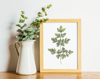 Parsley - parsley painting - herb painting - Arugula watercolor - home decor painting - kitchen art - dining room art - food art - herbs