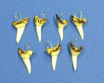 Mako Shark Tooth with Gold Wire  (EA)