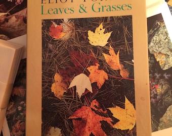 ELIOT PORTER - Leaves & Grasses-note cards/envelopes-MMA-framable