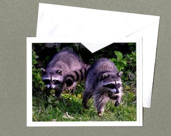 Raccoons Photo Greeting Card