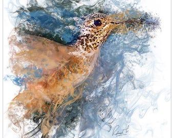 Art-Prints - Orange Hummingbird