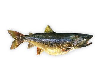 Monster Lake Trout Decal, Monster Lake Trout Sticker