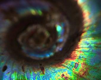 Ammonite Swirl Macro Photo PRINT 4x6