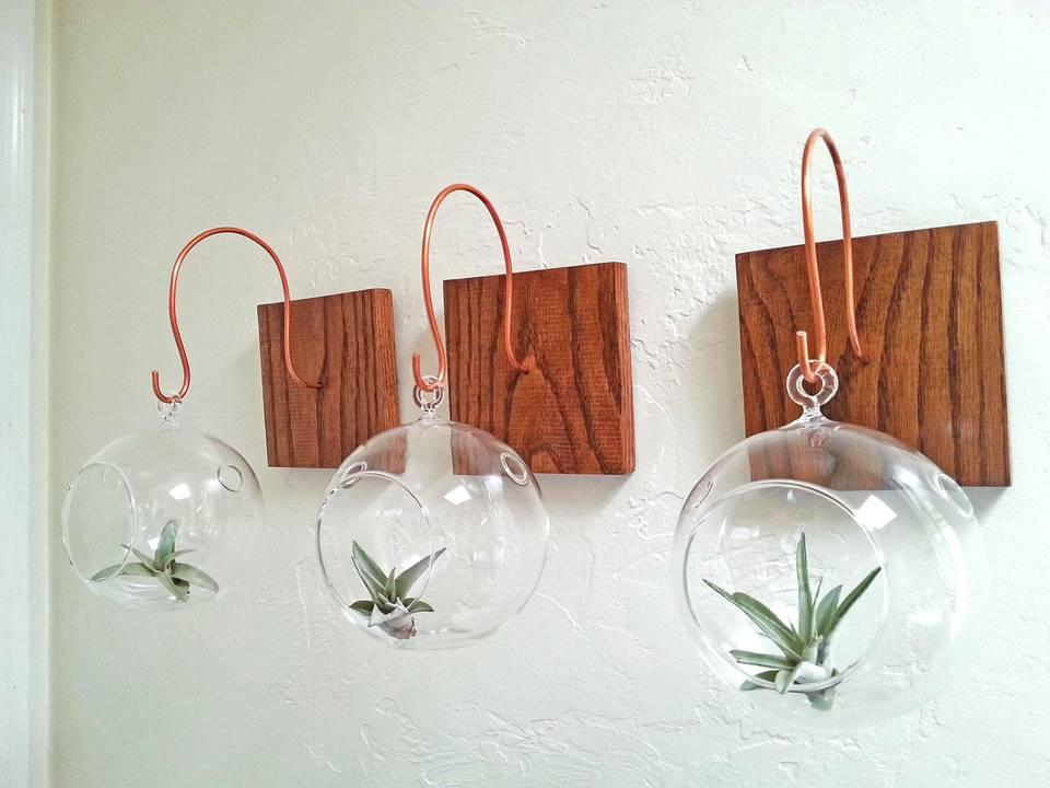 Hang Your Terrarium Wall Mount For Hanging Terrarium