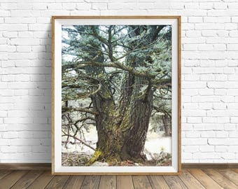"digital photography wall art, instant download printable art, large wall art, large art, nature photography prints, nature - ""Old Growth"""