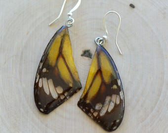 1 Pair REAL Yellow Butterfly Wing Earrings Preserved in Resin - Nature Earring Insect Charm