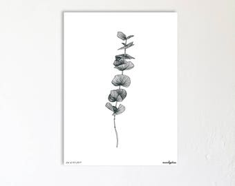 Illustration drawing made by hand - numbered limited Edition Poster - branch of Eucalyptus - pseudo-petiole - Botanic Poster