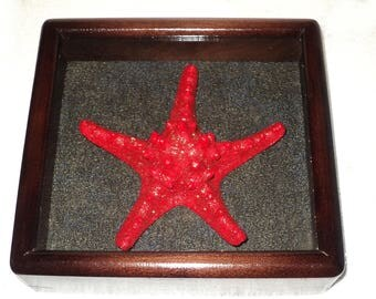 Starfish in gold pollination in frame made of expensive wood.