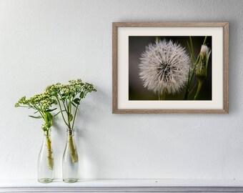 Dandelion Fine Art photography,  Wanderlust Flower Photograph, Fine Art Print, Fine Art Photography, Flower Photography