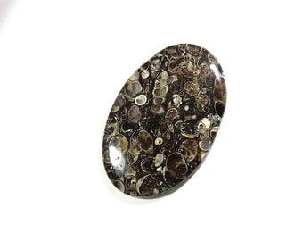 98Cts 58X37X5mm Turritella Agate fossil Cabochon Loose Gemstone Oval Shape Turritella AAA Top Quality Natural Turritella Fossil Agate