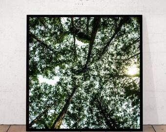 Trees Print, Trees Square, Tree Crown, Tree Photography, Tree Wall Decor, Tree Crown Print, Tree Art Photography