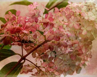 Pink Flowers, flowering tree, Hydrangea Tree, summer, flowers, floral, picture, photograph, home decor,