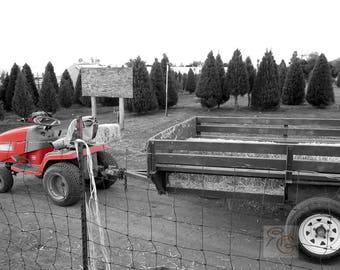 christmas tree farm, holiday wallpaper, christmas wallpaper, desktop wallpaper, country christmas, holiday images, christmas photo, pines