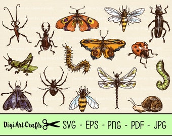 Hand dawn bugs / insect clip art / Realistic looking butterfly images / insect SVGs / Nature Clipart / diy craft projects / Small commercial