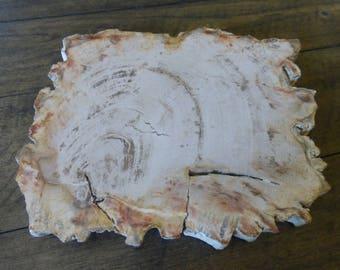 Petrified wood, petrified wood slab, polished petrified wood, fossilized wood, healing stone, altar stone.