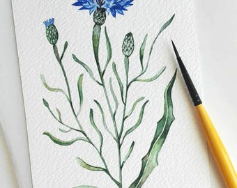 Cornflower painting Flowers watercolor Watercolor Original Small painting Blue flower