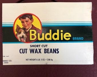 Wire Fox Terrier Buddie