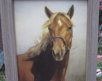 Vintage Equine / Horse Picture