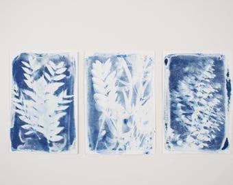 Set of 3 Handmade Art Print /  Medium Original Botanical Floral Cyanotype Photogram Art / Blue / Indigo Print