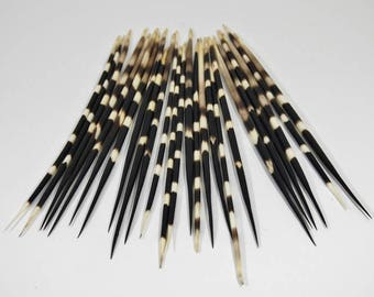 Large African Porcupine Quills - Set of 10 (184-02L)