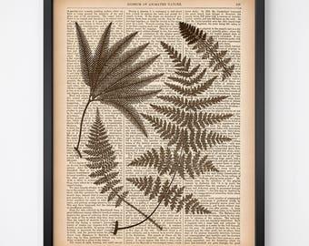 Fern print, Dictionary art print, 8x10 and 11x14 instant download print, Fern wall art, Botanical printable art, Vintage fern print, JPG