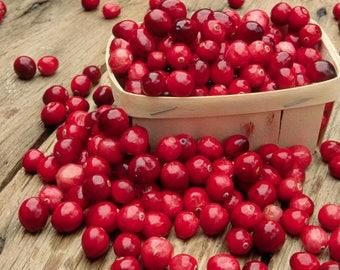 Mayonnaise (Cranberry Mayonnaise 8oz.)