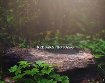 Forest Log Digital Background