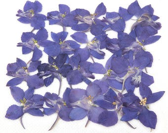Pressed flowers, blue larkspur 20pcs for floral art, craft, card making, scrapbooking