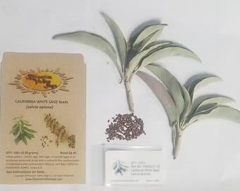 California White Sage Seeds & Leaves -  Salvia apiana - PLUS a few Fresh White Sage Leaves
