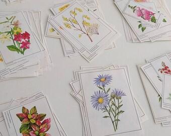 Vintage plants & flowers ephemera paper cutouts